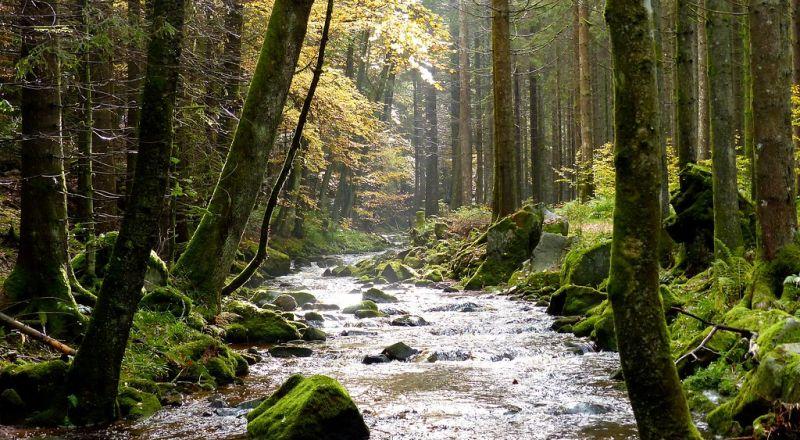 السفر إلى الغابة السوداء في ألمانيا وأبرز المعلومات عنها