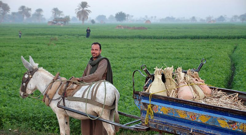 مصر تخفض الاستيراد من الدول العربية