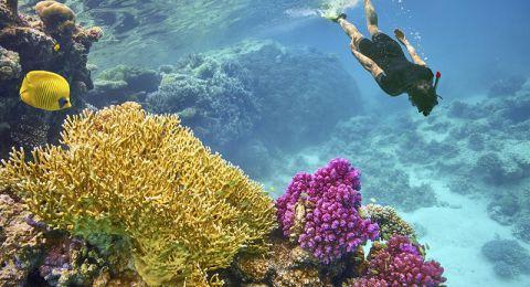 متعة استكشاف الحياة البحرية في الغردقة