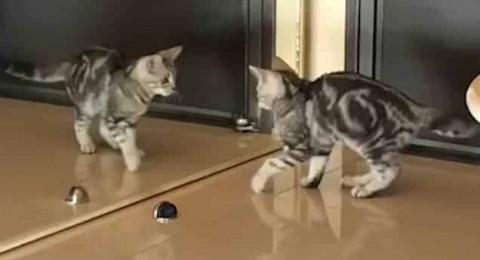 فيديو طريف.. قط يبحث عن نفسه أمام المرآة