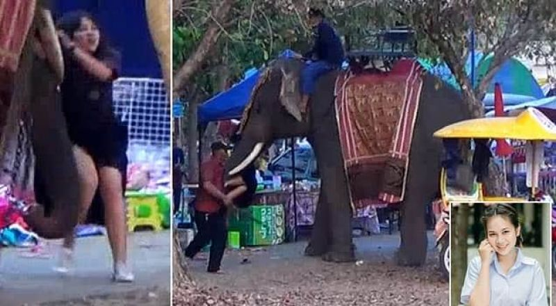 فيل هائج يخطف فتاة ويركض بها في مهرجان تايلاندي