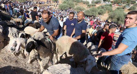 سوق أضحى متواضع بالضفة ومعدم بغزة