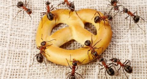 كيف تطردين النمل من منزلك؟
