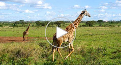 السياحة في نيروبي ممتعة خلال يناير