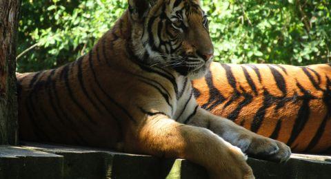 حديقة حيوانات تطلق اسم