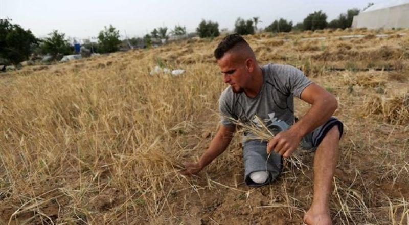 الأمم المتحدة: المئات معرضون لخطر بتر أطرافهم في غزة
