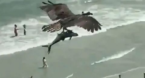 طائرٌ عملاق يحلّق حاملاً سمكة تشبه القرش!