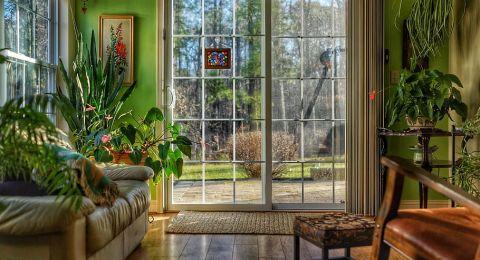 الديكور الدخلي: لكلّ غرفة نبتة مناسبة