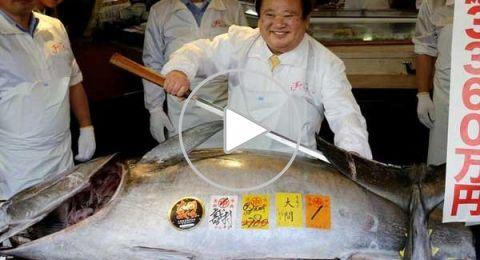 بيع سمكة تونة مقابل 3 ملايين دولار