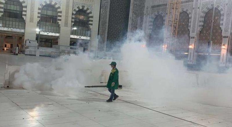 استنفار في مكة لمواجهة زحف جيوش جرارة من الجداجد