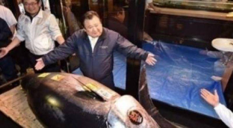 سمكة تونة ب3 ملايين$ في اليابان