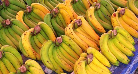 الموز فاكهة عالية القدرات في تأمين التوازن الصحي للجسد