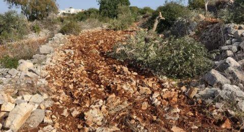 مستوطنون يقطعون أشجار زيتون معمّرة غرب سلفيت
