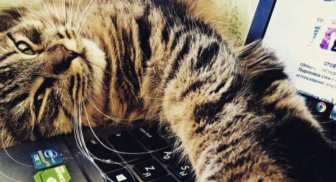 العمل من المنزل بالقرب من حيوان أليف يعزز الصحة النفسية