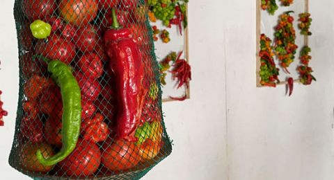 فن الخضراوات.. نيجيري يطلق معرض من الفلفل والطماطم بسبب كورونا