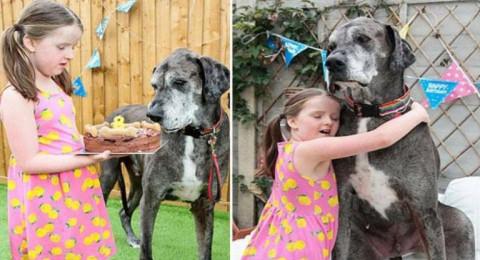 أطول كلب في العالم يحطم رقمًا قياسيًا جديدًا!