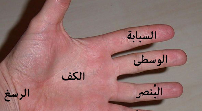 شكل يديكِ يكشف الكثير عن شخصيتك!