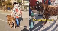 شاب يتجول بنمر في الشارع.. وامرأة عند رؤيته تفجر مفاجأة غير متوقع