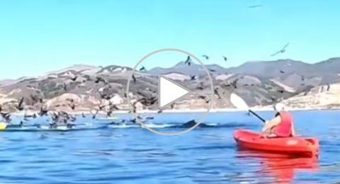 حوت ضخم يبتلع قاربا على متنه شخصين بأحد شواطئ أمريكا