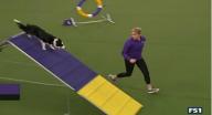 كلب يحطم رقما قياسيا في تخطي الحواجز بأمريكا