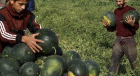 البطيخ.. 10 فوائد رائعة و