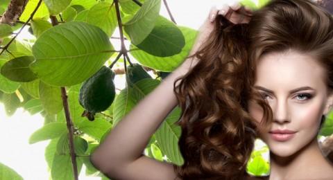 هل توقف أوراق الجوافة تساقط الشعر نهائيًا؟