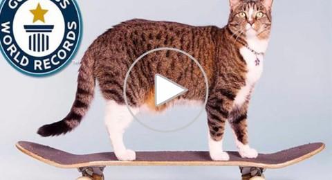 قطة تدخل موسوعة جينيس لعام 2017 !