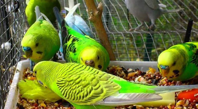 لن تصدقوا فوائد طعام الطيور في خسارة الوزن