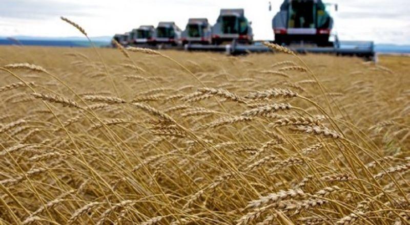 المغرب :شحّ الأمطار يدفع إلى استيراد 35 مليون قنطار من الحبوب