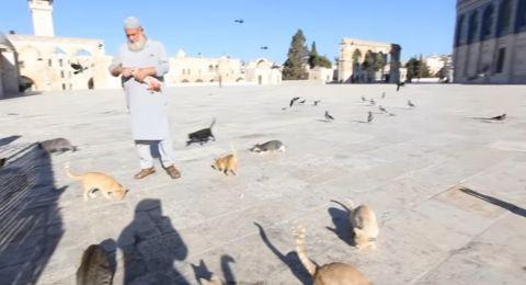 حاج فلسطيني: جميع قطط المسجد الأقصى تعرفني