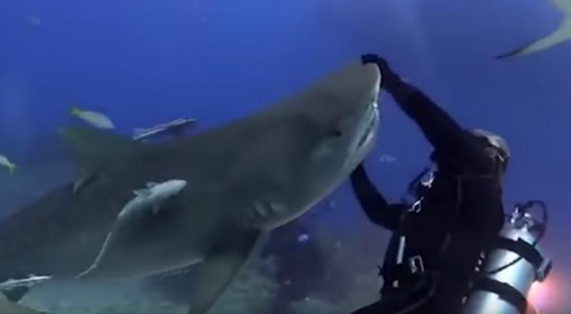 غواص يرقص مع سمكة قرش في أعماق البحار