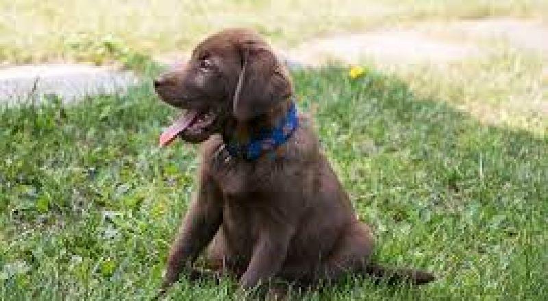 وزارة الصحة تحذر !! داء الكلب في شمال البلاد
