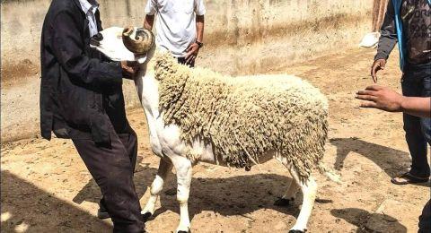 المغرب.. أضاحي تنحر في جنح الظلام!
