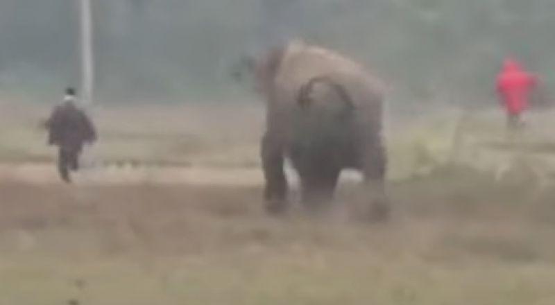 رد فعل صادم من فيل بسبب صورة سيلفي مع رجل