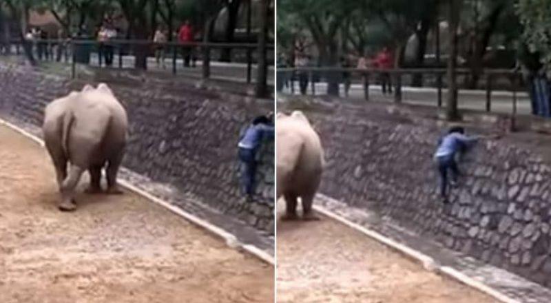 فتاة تتحدى الموت لإنقاذ جوالها من وحيد القرن