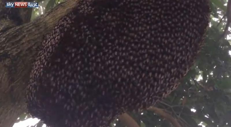 رقصة النحل للدفاع عن النفس.. وفيديو للتنظيم الفائق