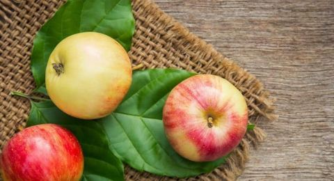 تفاحة في اليوم.. هذا ما تفعله فعلا بصحتك؟