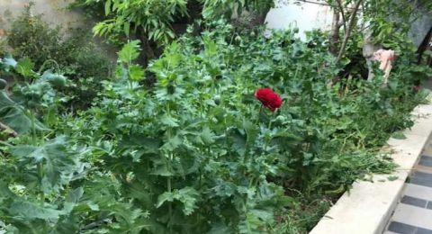 """فلسطيني يستدعي الشرطة بعد ظهور """"زهور"""" غريبة في حديقة منزله!"""