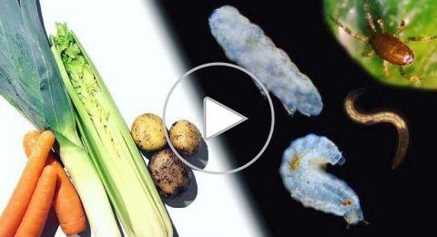 فيديو مروع يكشف ما الذي يحتويه طعامنا فعلا