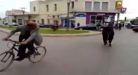 ثور يثير الفزع في شوارع مدينة مغربية