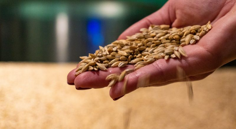 ما هي أعراض حساسية القمح وما علاقتها بالداء البطني؟