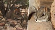 لم يشاهد منذ عام 1968.. فيديو يرصد حيوانا نادرا في أفريقيا