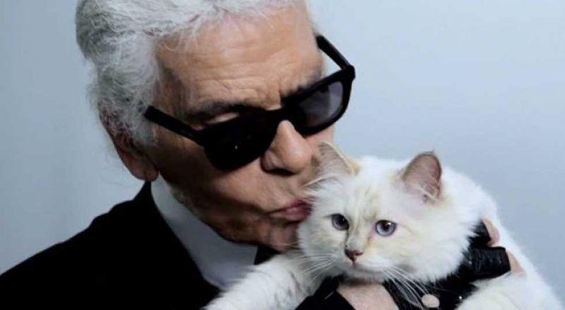 قطة تملك حساباً بنكياً وترث ملايين الدولارات
