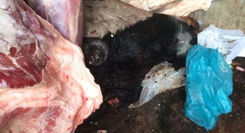 شفاعمرو: مصادرة نصف طن من اللحوم واعتقال صاحب الملحمة للتحقيق معه