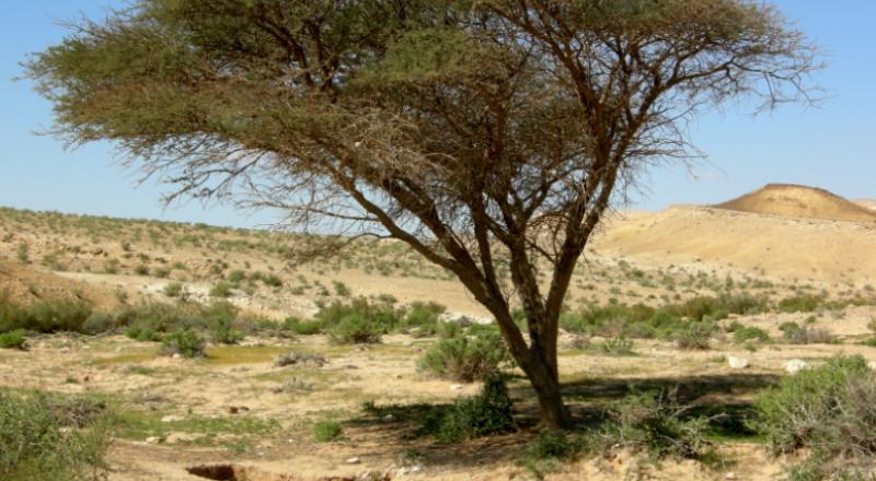 حالة الطقس: استمرار موجة الحر وتحذير من التعرض لأشعة الشمس