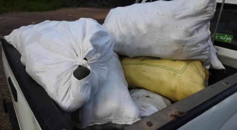شيخ دنون: اعتقال 4 اشخاص بشبهة سرقة افوكادو