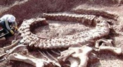العثور على أقدم ديناصور في المغرب