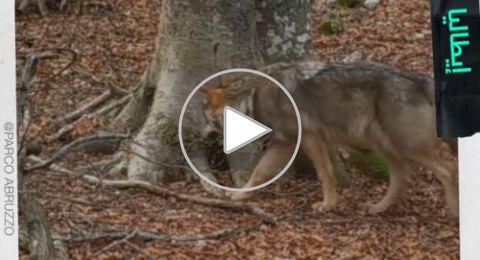 علماء ثبتوا كاميرا أمام شجرة لمدة عام.. فكانت النتيجة مذهلة