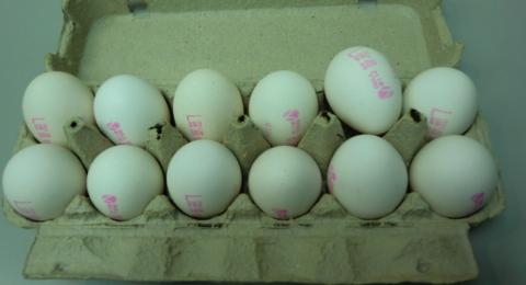 كيف نتأكد من صلاحية البيض وإن كان طازجًا