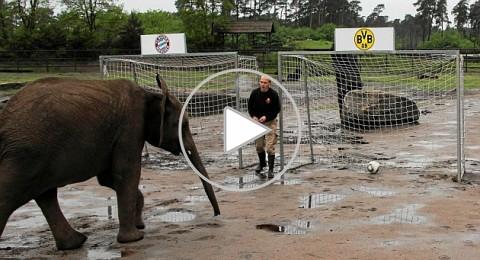 الفيل نيللي يتوقع فوز بايرن ميونخ بنهائي دوري الابطال ..!